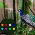 Peacock dance forest escape - escape game