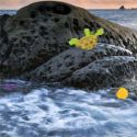 Rocky seashore escape - escape game